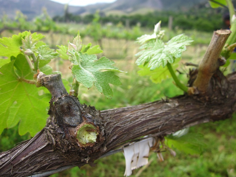 Read more about the article Floricius Beukes: Eco friendly wine making in Groot Constantia!