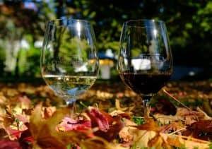 two glasses wine between leaves