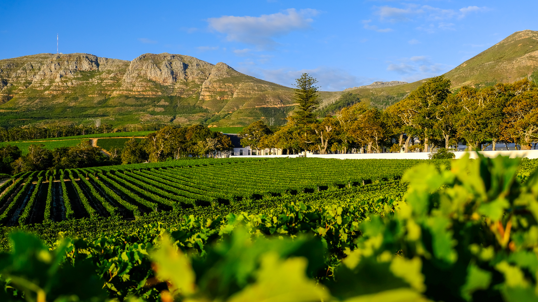 GROOT SUMMER FUN AT GROOT CONSTANTIA TO CELEBRATE THE HOLIDAYS